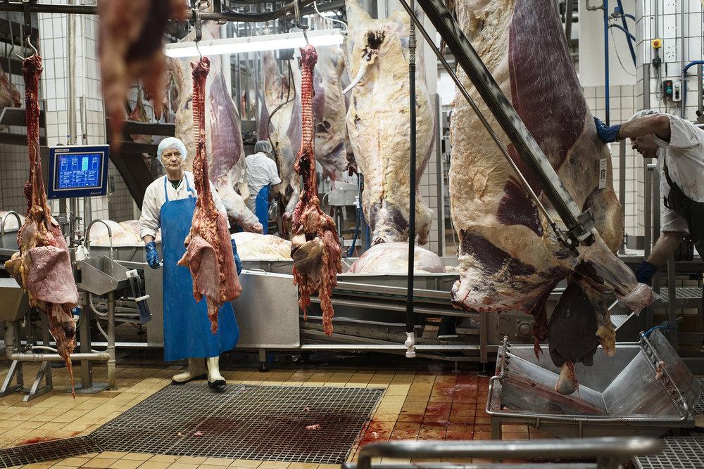 Bloddryppende og på række kommer den ene ko efter den anden ind i den store slagtehal på Aarhus Havn, hvor ca. 170 køer bliver slagtet om dagen. Pia Andersen er uddannet pølsemager, men har i ni år arbejdet som tilsynstekniker for Fødevarestyrelsen på Århus Slagtehus. Hun er den eneste kvinde i produktionen, men elsker at gå på arbejde og føler sig som blommen i et æg mellem de mandlige kolleger, der går og laver sjov med hinanden.