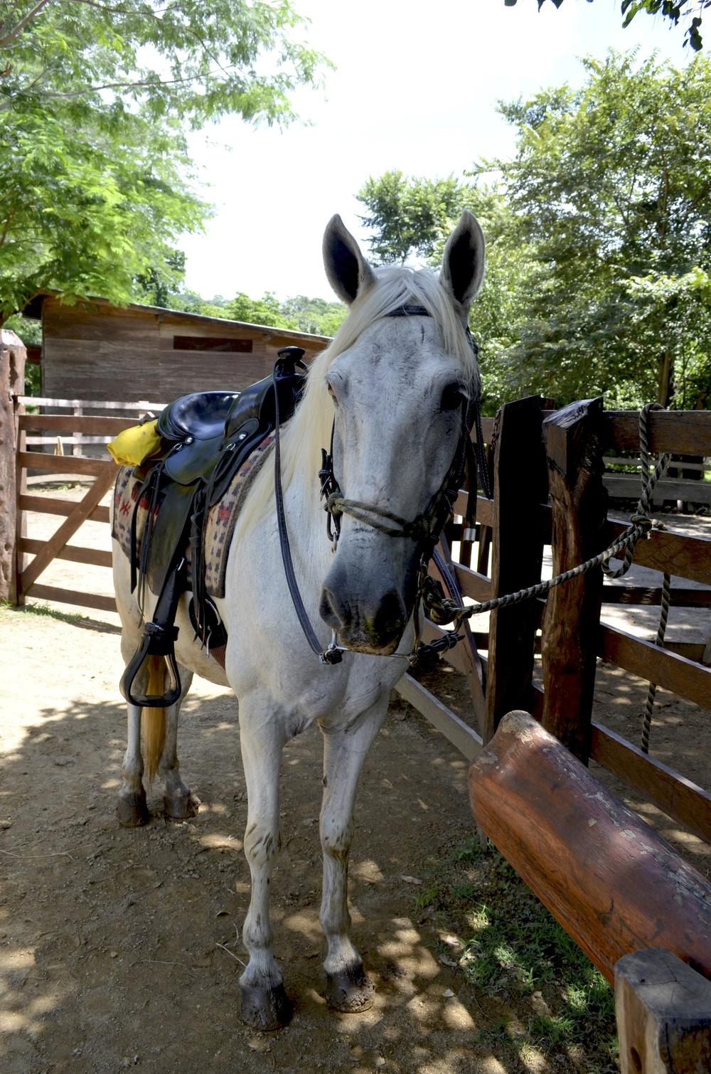 white-horse-nicaragua
