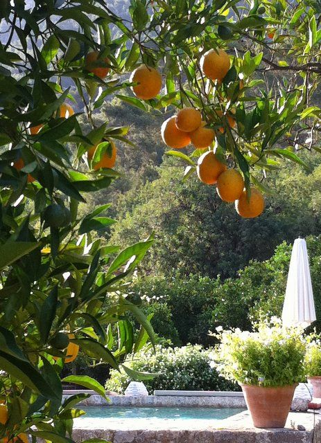 Oranges and a pool, Mallorca, Spain