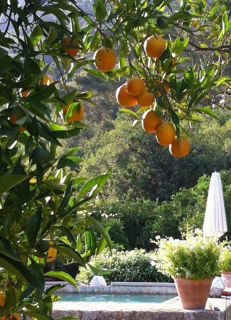 oranges-mallorca