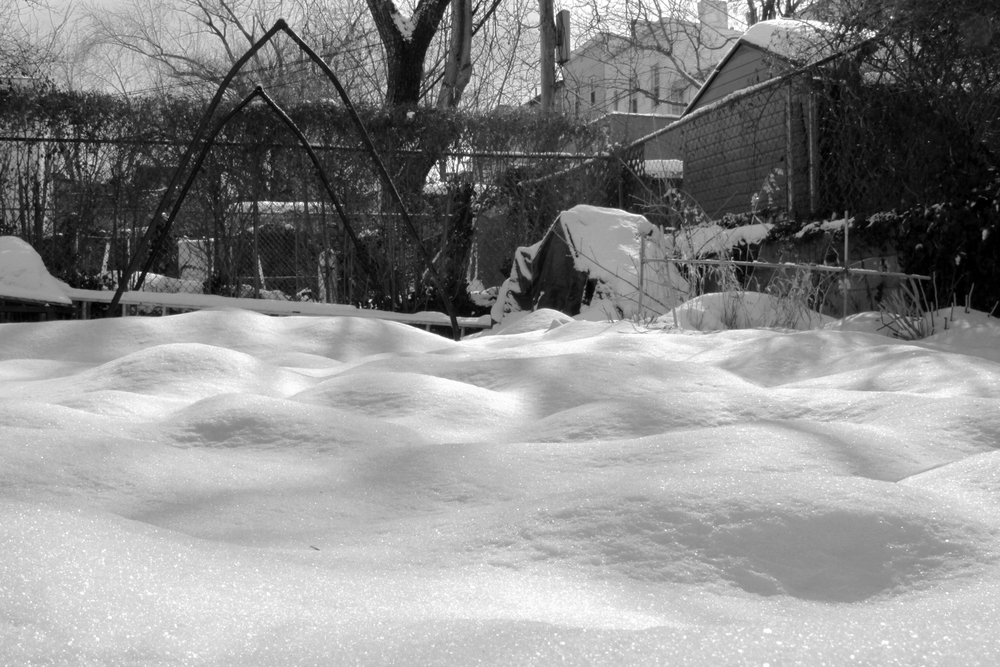 Rolling hills of snow in our backyard