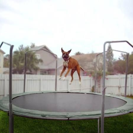 999149cc789306b0ba4c9a4a8f208260--trampolines-wild-animals.jpg