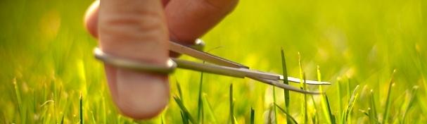 details-grass.jpg