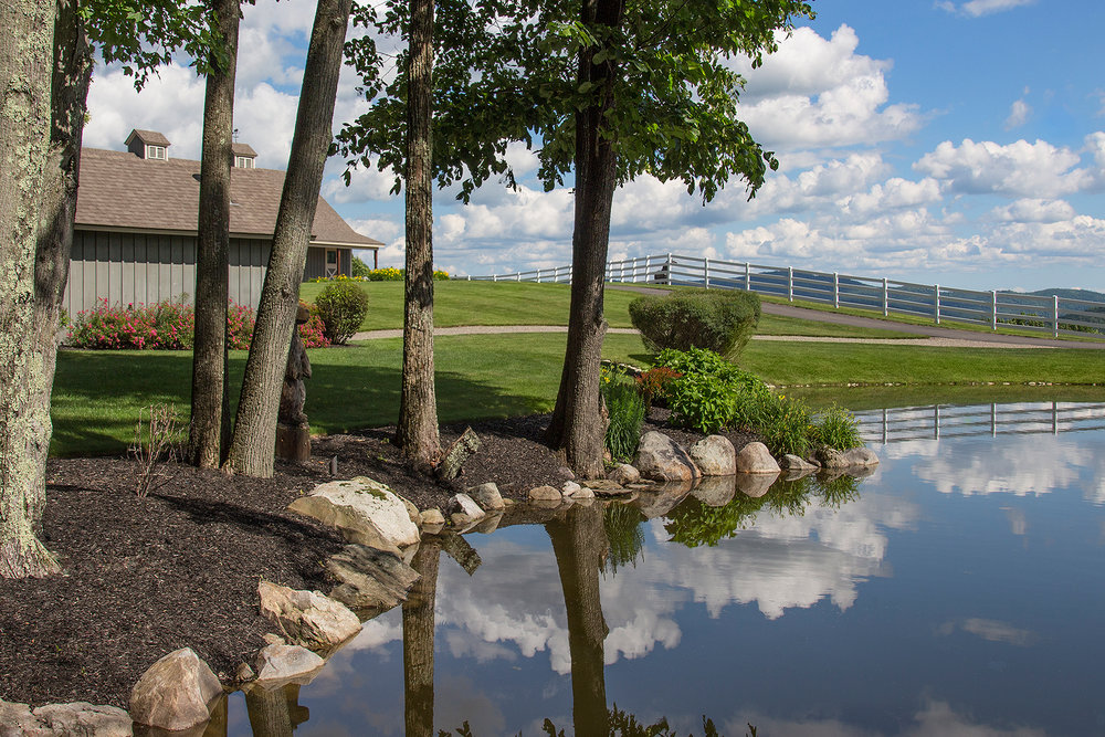view over pond to barn.jpg
