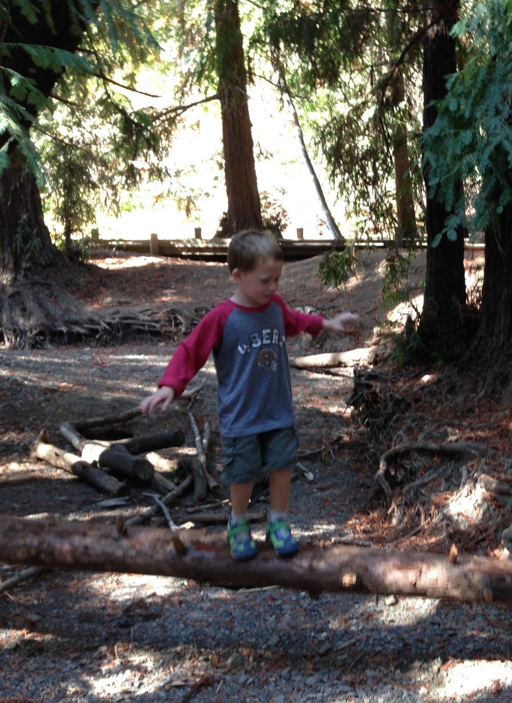 Walking across fallen logs at the Redwood Nature Preserve in Los Altos