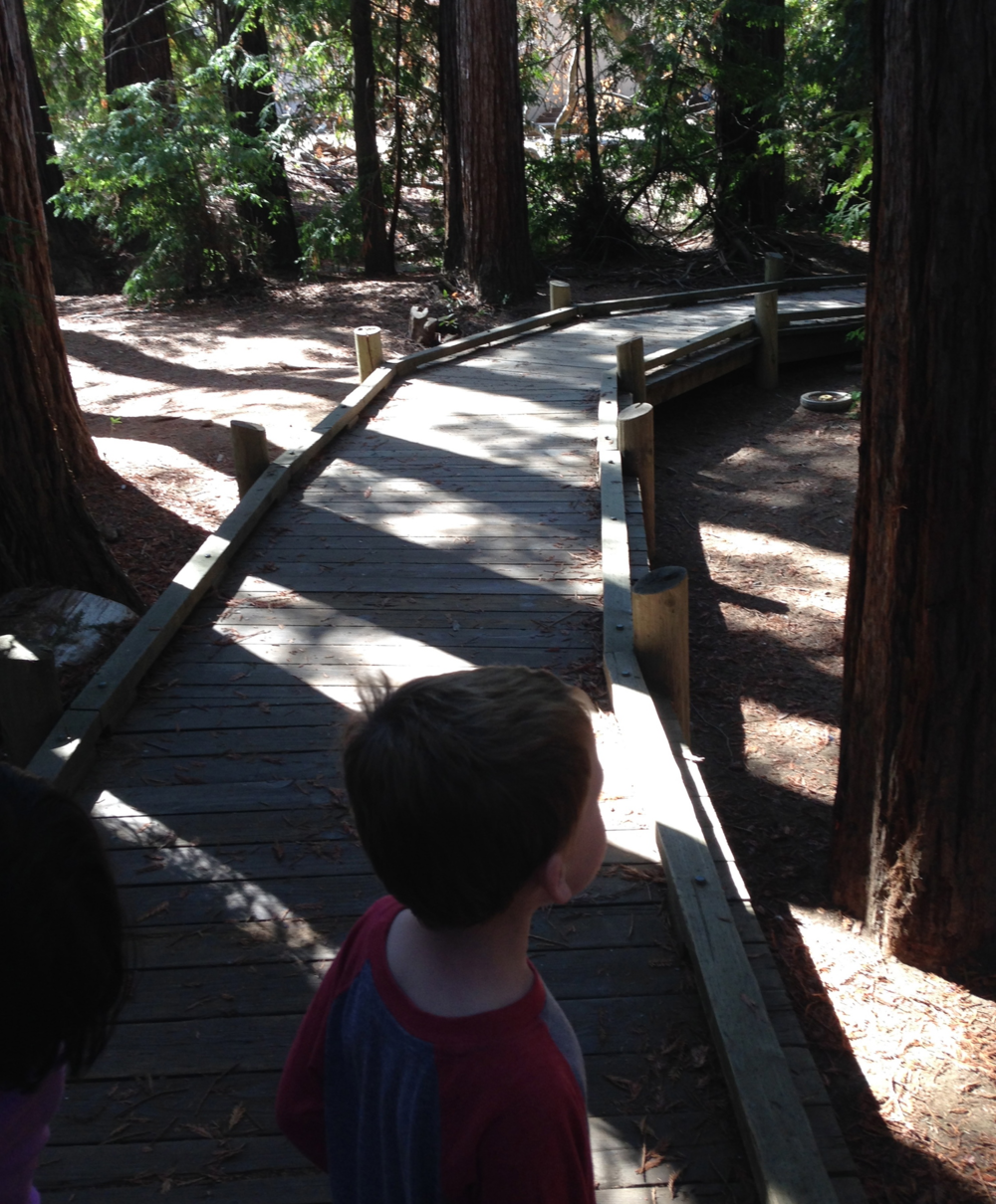 The boardwalk though the Redwood Grove Nature Preserve in Los Altos
