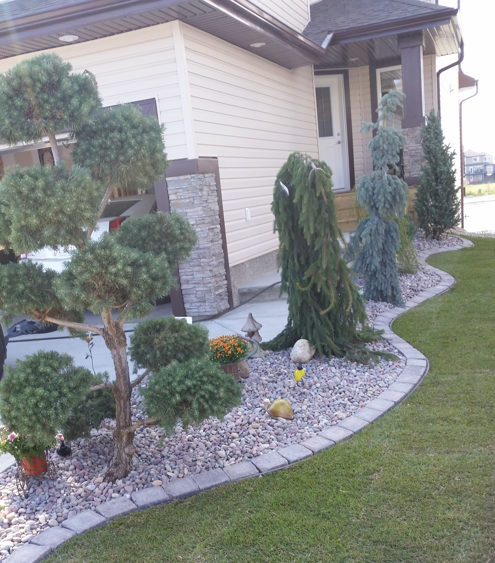 Rock Bed with Shrubs