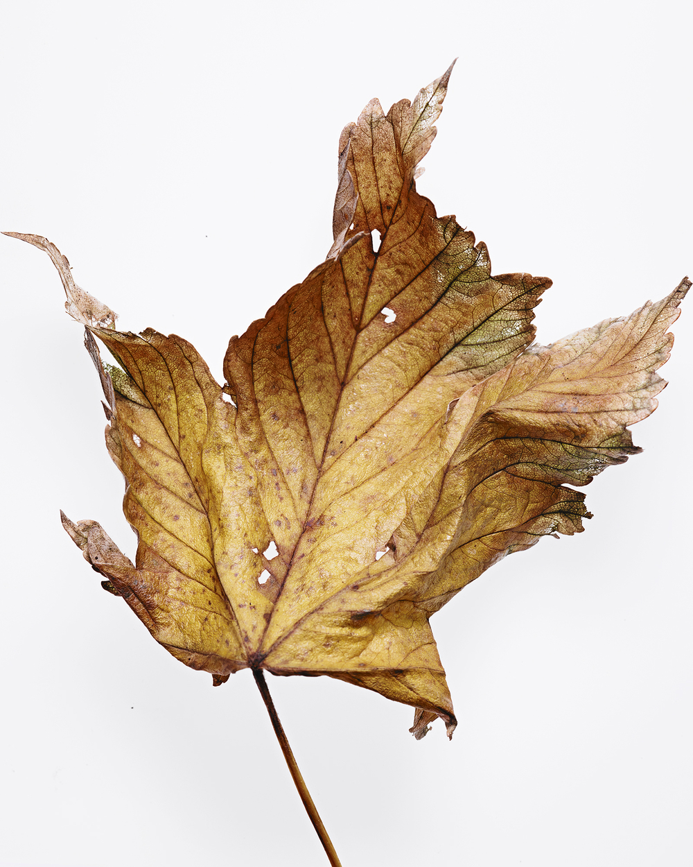 141219_LEAVES_RDH62652_WebReady.jpg
