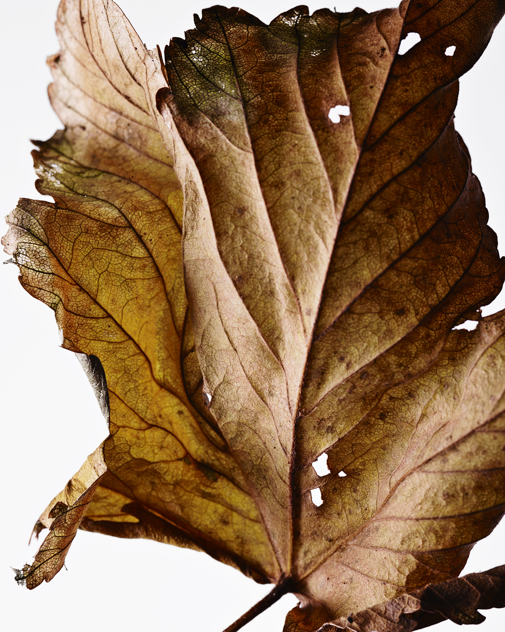 141219_LEAVES_RDH62670_WebReady.jpg