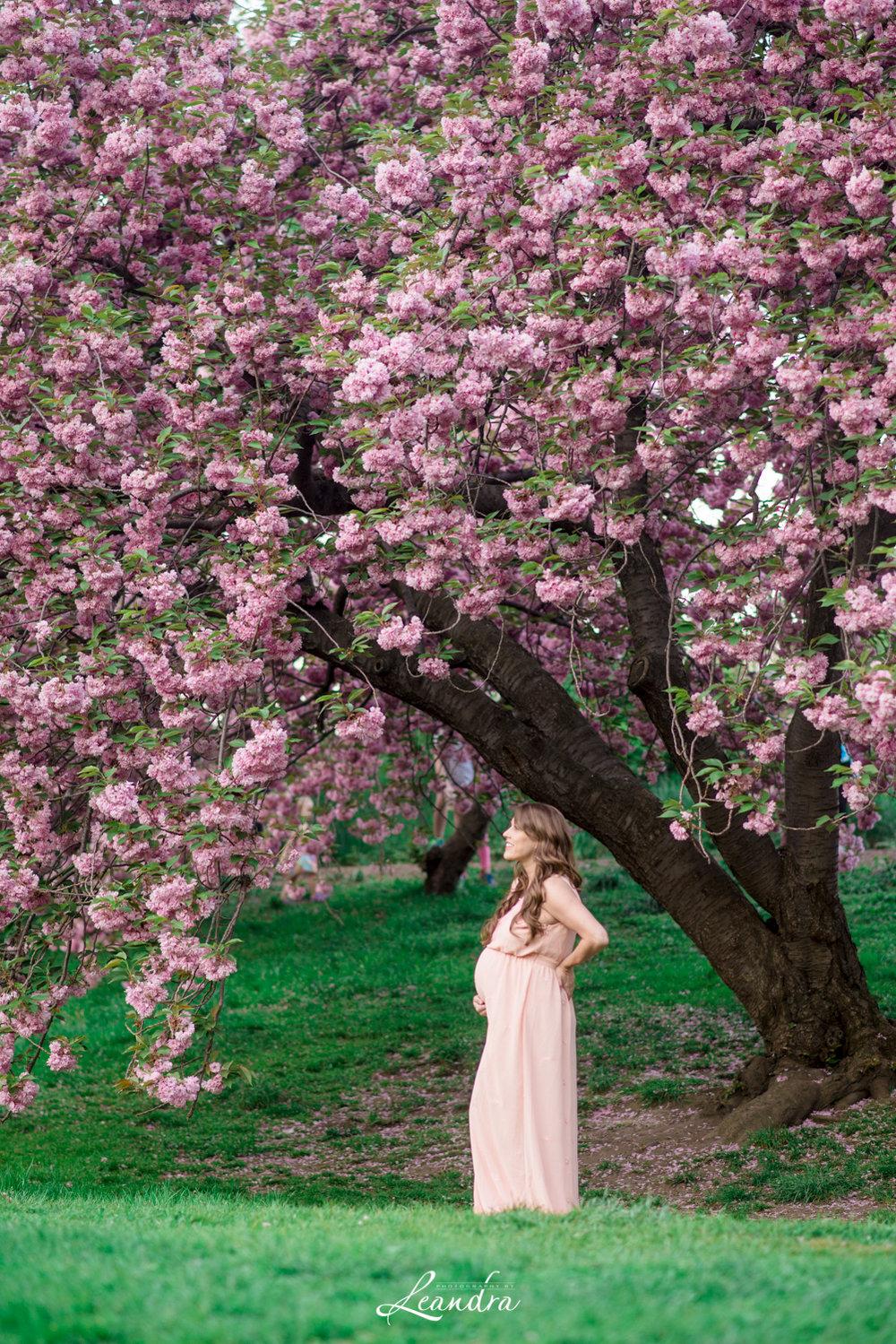CentralParkCherryBlossoms-24.jpg