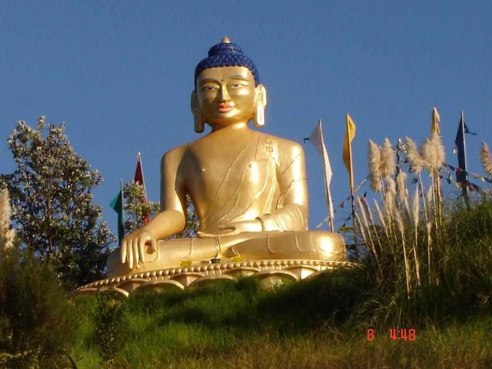 Kiwi Buddha.jpg