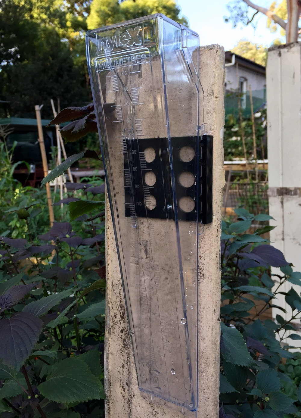 The garden's new rain gauge - nice and dry (not for long)