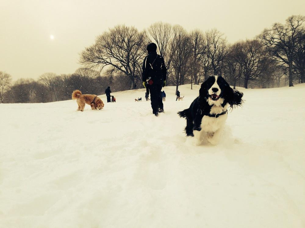 Winnie-running-snow.JPG
