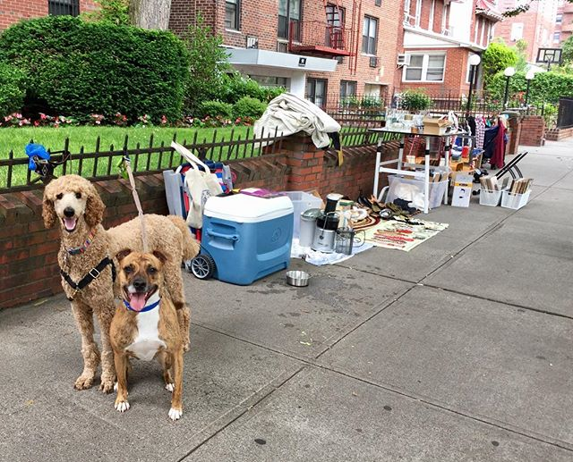 Come hang at our stoop sale. Puppy kisses are free! Proceeds go to animal rescue!