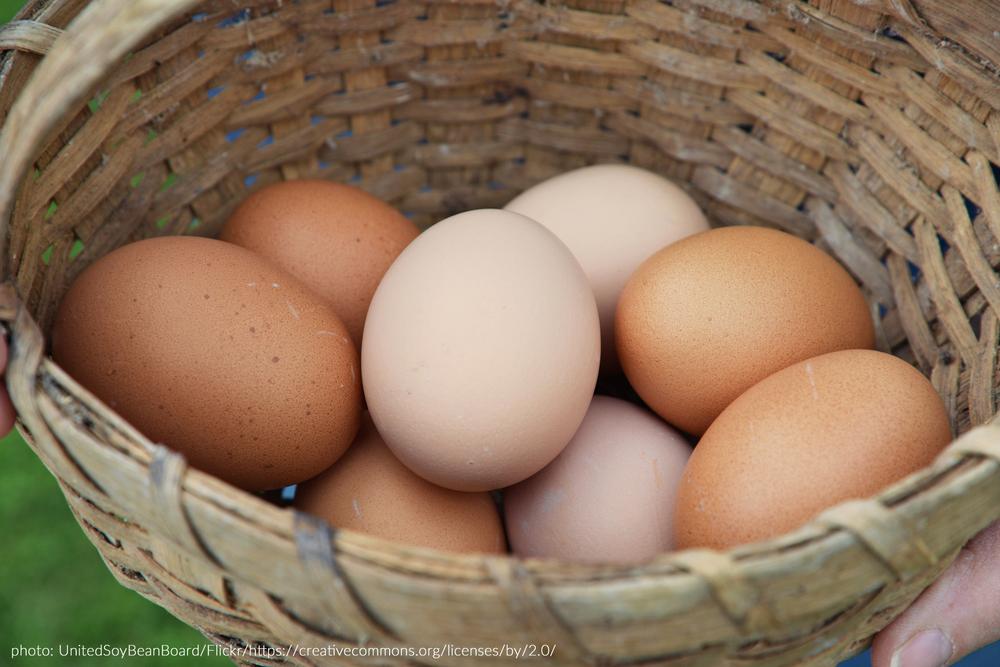 egg fra høns som går ute har 400% mer omega-3