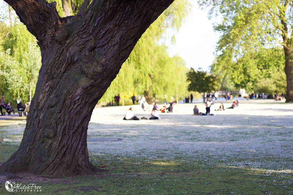 Det blomstrer i regnets park, london