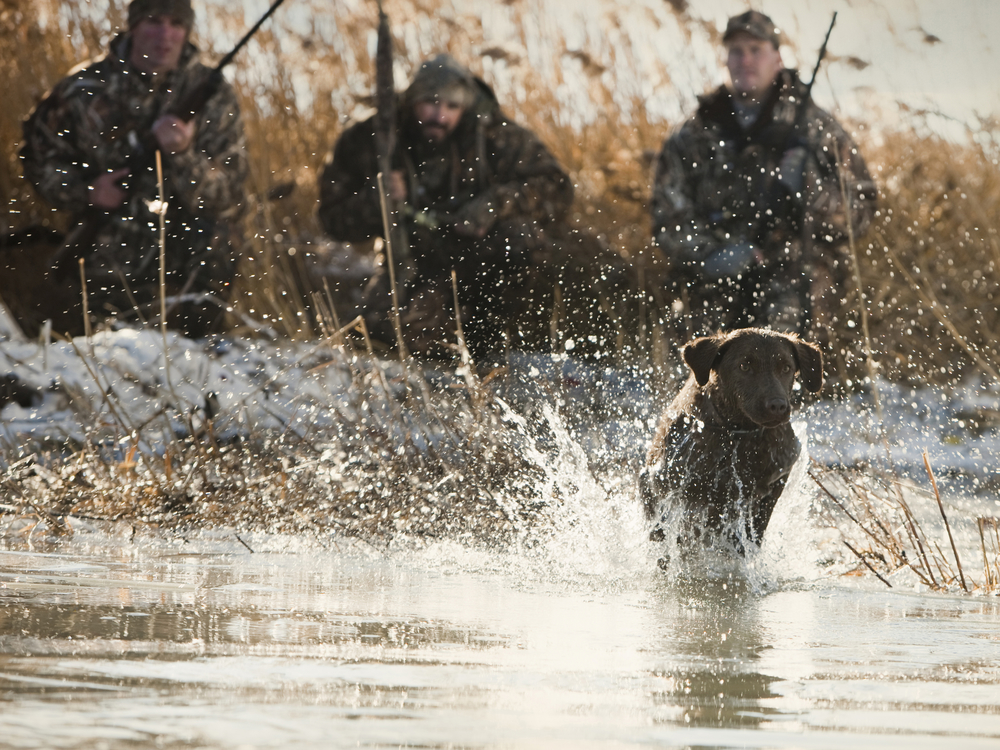 The 10 Laws of Hunts And How Learn More