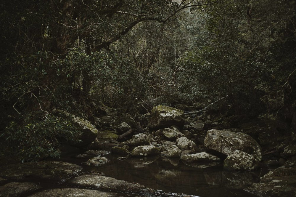 Susan_Remi_Same_Sex_Elopement_Anteloping_Kangaroo_Valley_Blog-35.jpg