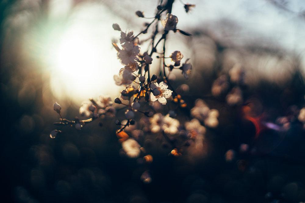 flowers_sunset.jpg