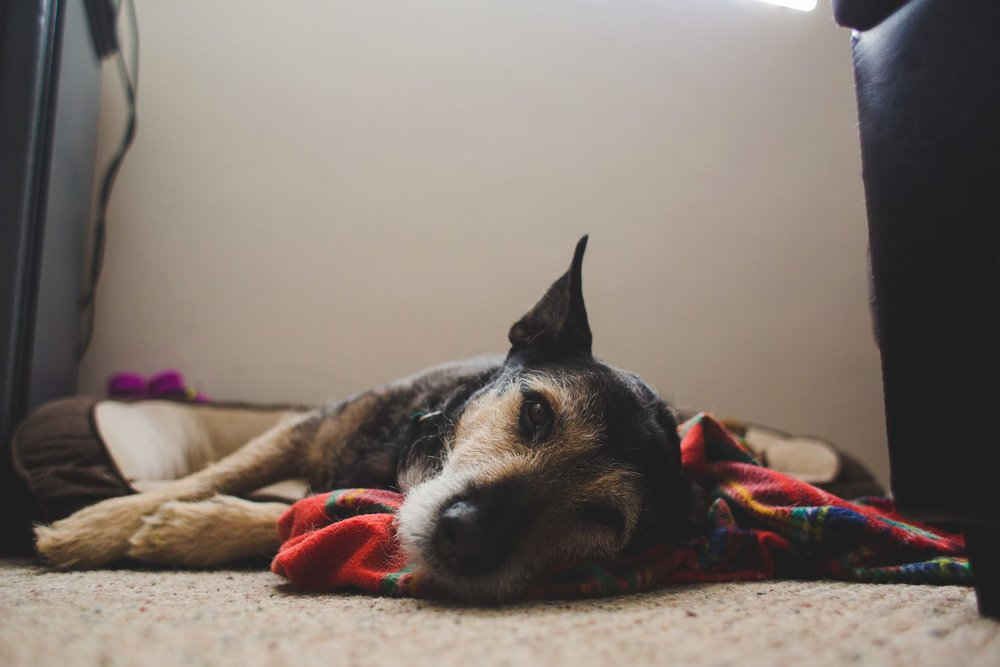 murray-kes-baddest-dog-around