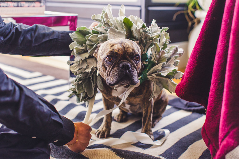 flower-crown-for-dog-french-bulldog