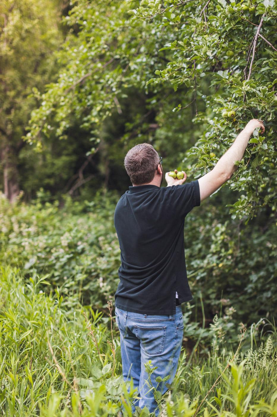 man-apple-picking