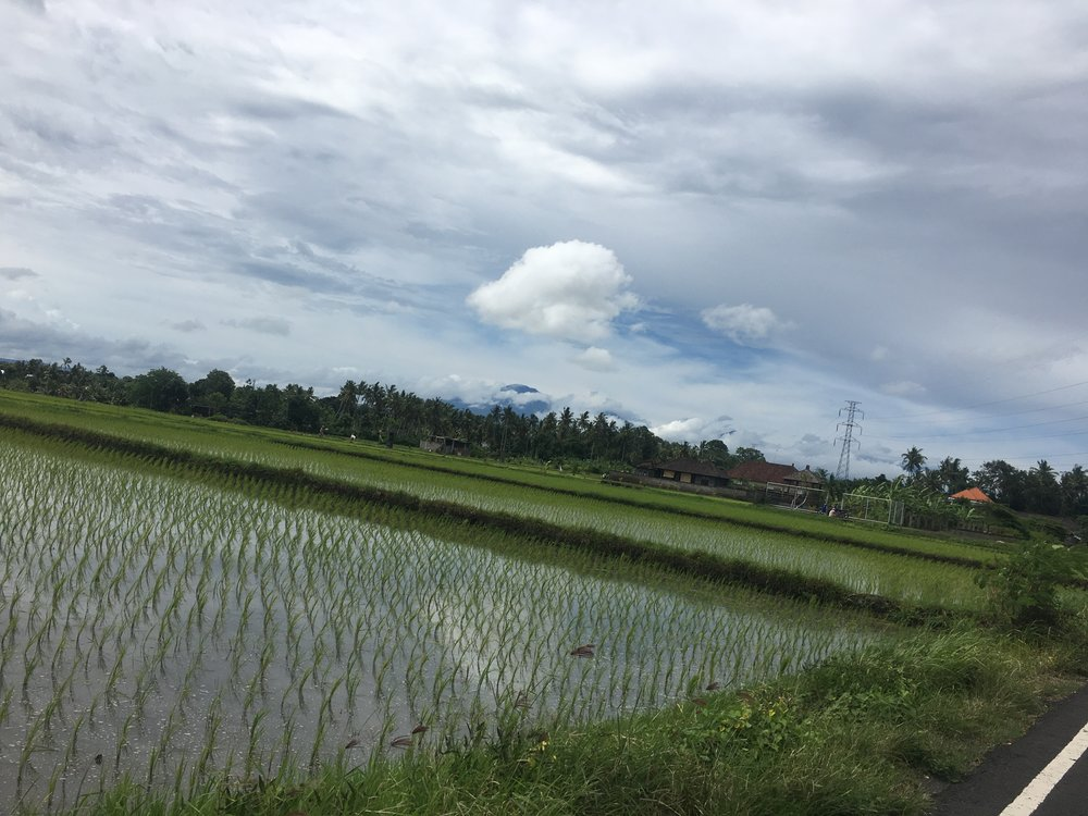 Motorbike through rice fields of Western Bali