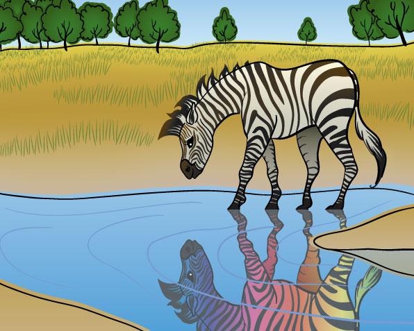 Baby-Zebra.jpg