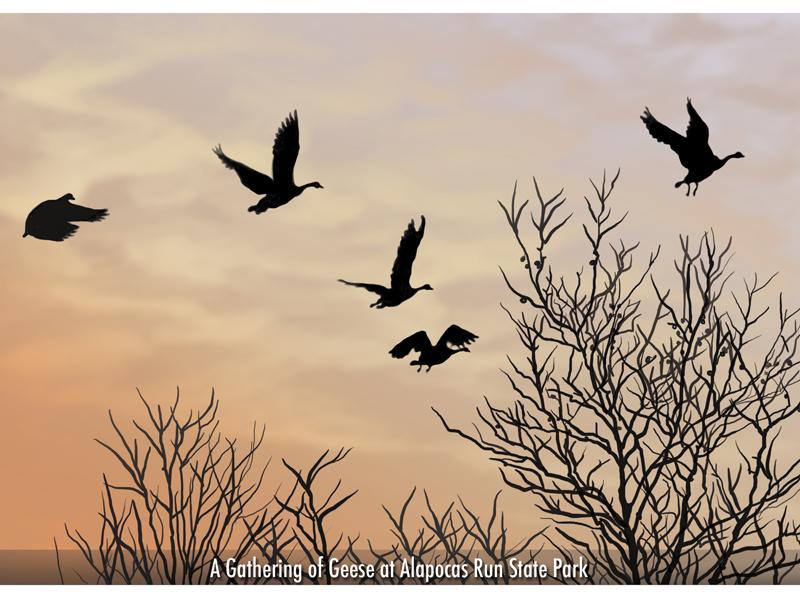 Gathering of Geese_digital_postcard.jpg