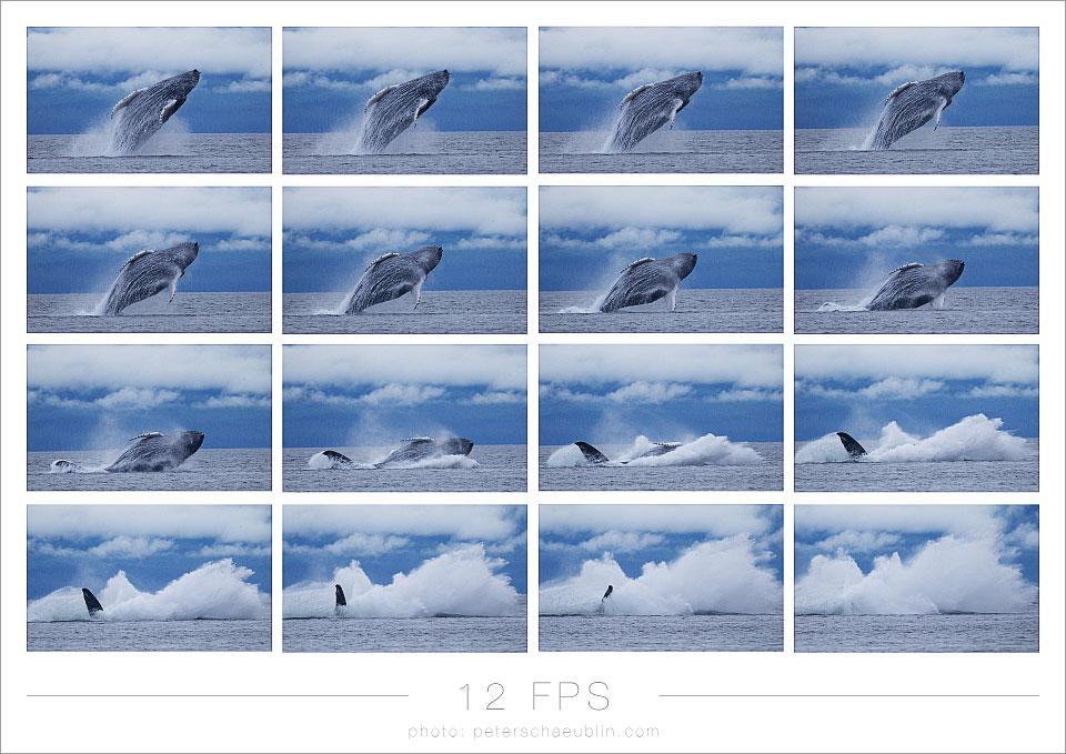 blog_20120915_alaska_11.jpg