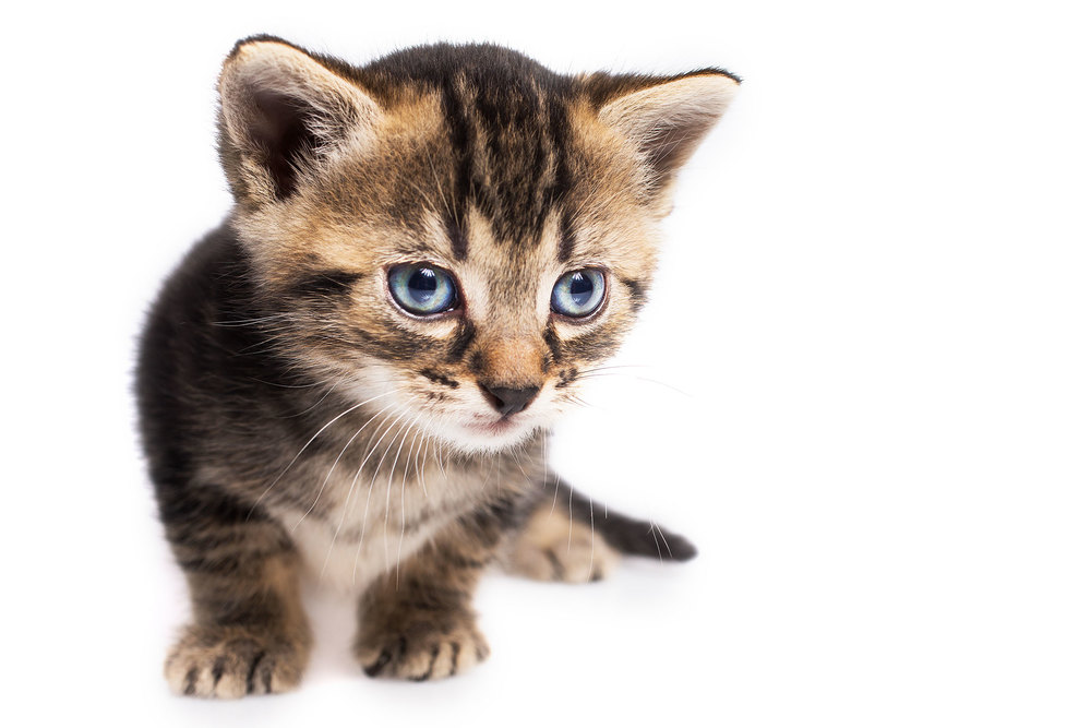 Spiel mit den Reflexen: Um ein knackigeres Licht und interessante Reflexe in den Augen der jungen Katzen zu erhalten, habe ich diese Aufnahmen mit dem Umbrella Silver XL realisiert. Mehr Bilder aus dieser Serie finden Sie in meinem   Blogartikel vom 14. Juli