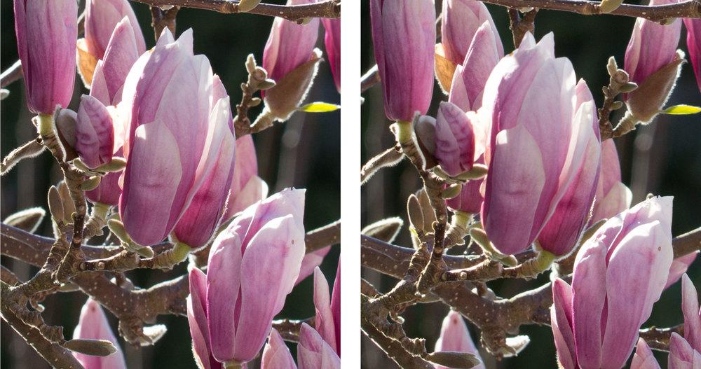 1:1 Ausschnitte bei 150 mm und Blende 11 links Sigma Sports 150–600mm f5–6,3 DG OS HSM, rechts Tamron SP 150–600mm f5–6.3 VC USD  (für vergrösserte Ansicht auf die Bilder klicken)