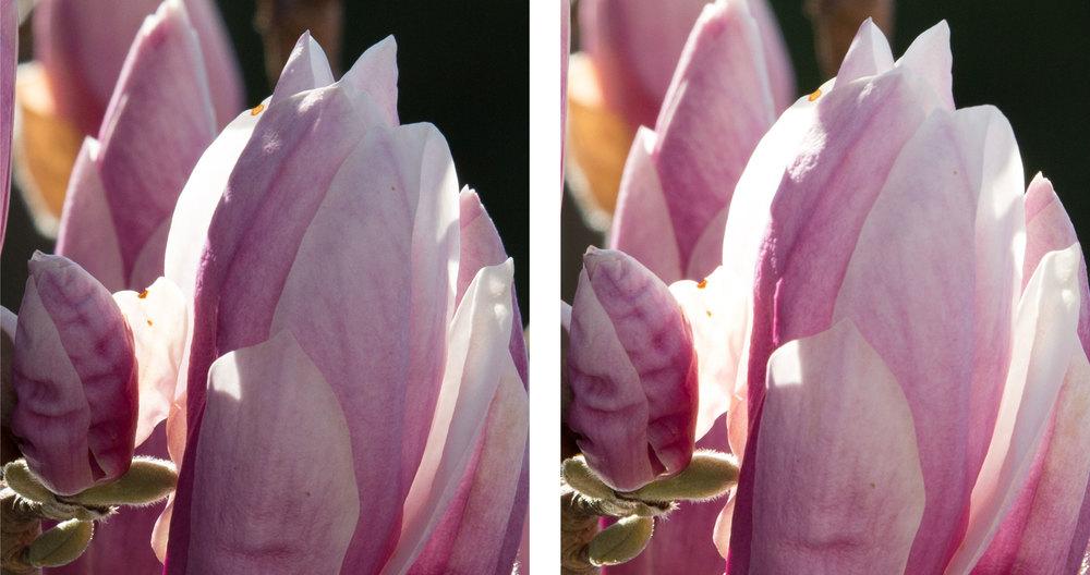 1:1 Ausschnitte bei 350 mm und Blende 11 links Sigma Sports 150–600mm f5–6,3 DG OS HSM, rechts Tamron SP 150–600mm f5–6.3 VC USD (für vergrösserte Ansicht auf die Bilder klicken)