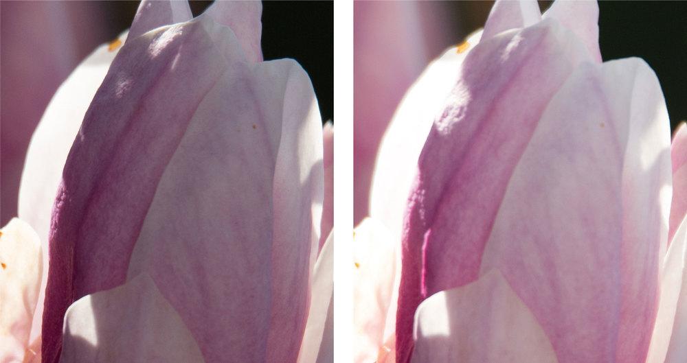 1:1 Ausschnitte bei 600 mm und voll offener Blende (6.3) links Sigma Sports 150–600mm f5–6,3 DG OS HSM, rechts Tamron SP 150–600mm f5–6.3 VC USD (für vergrösserte Ansicht auf die Bilder klicken)