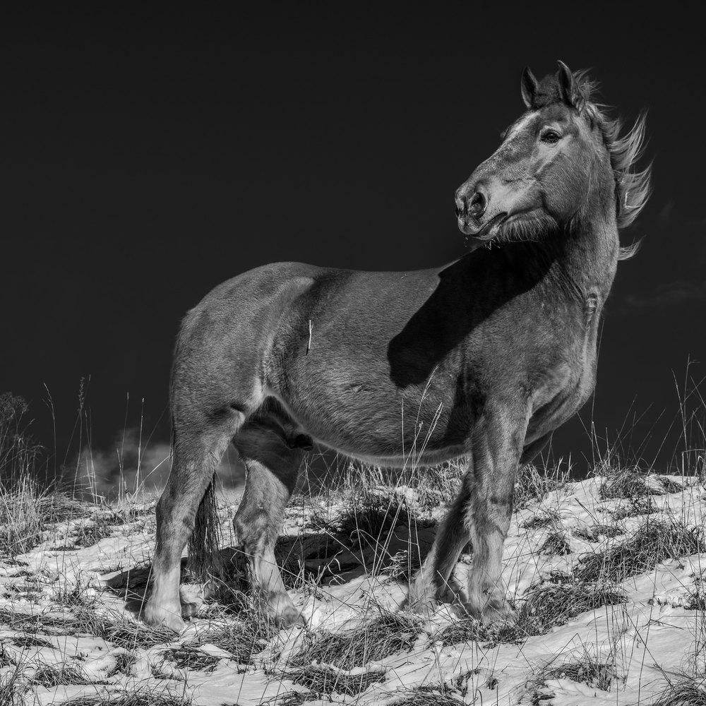 Leica SL, Vario-Elmarit 2.8–4.0/24–90 mm ASPH auf 65 mm, 1/200 sec, f 13, 125 ISO, Schwarzweissumwandlung, Kontrast- und Klarheitssteigerung im Photoshop