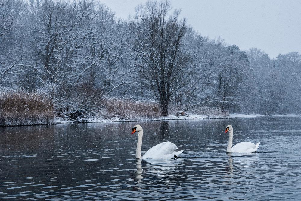 20170115_winterkajaken_P1070688.jpg