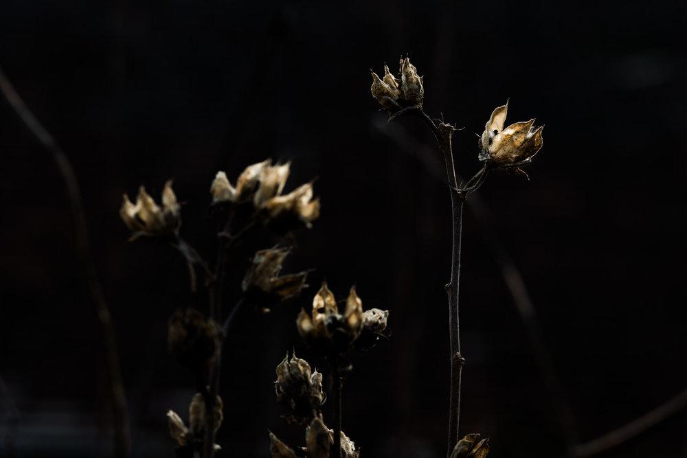Leica SL mit APO-Summicron-SL 2/90 mm / 1/400 sec / f 7.1 / 400 ISO Eine etwas schnellere Verschlusszeit, da sich die Pflanzen leicht bewegten