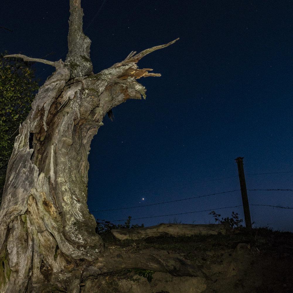 Alter Baum mit Abendstern.jpg
