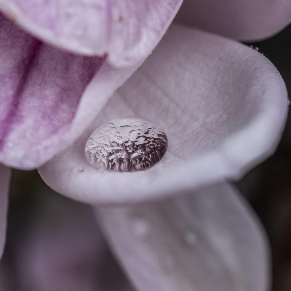 20190410_magnolia__DSF8747.jpg