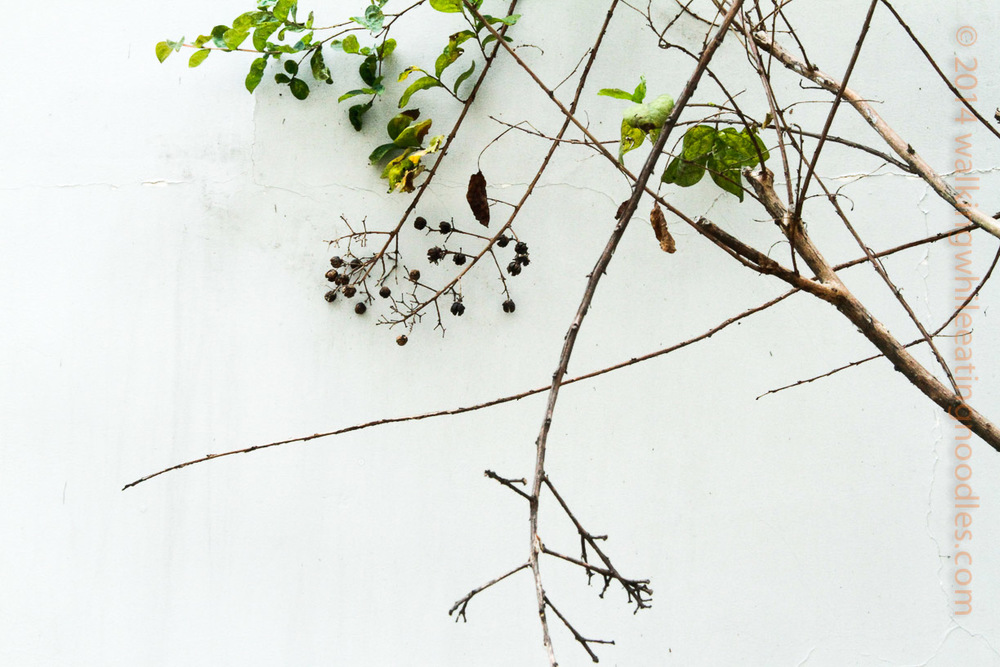Branches on white plaster wall
