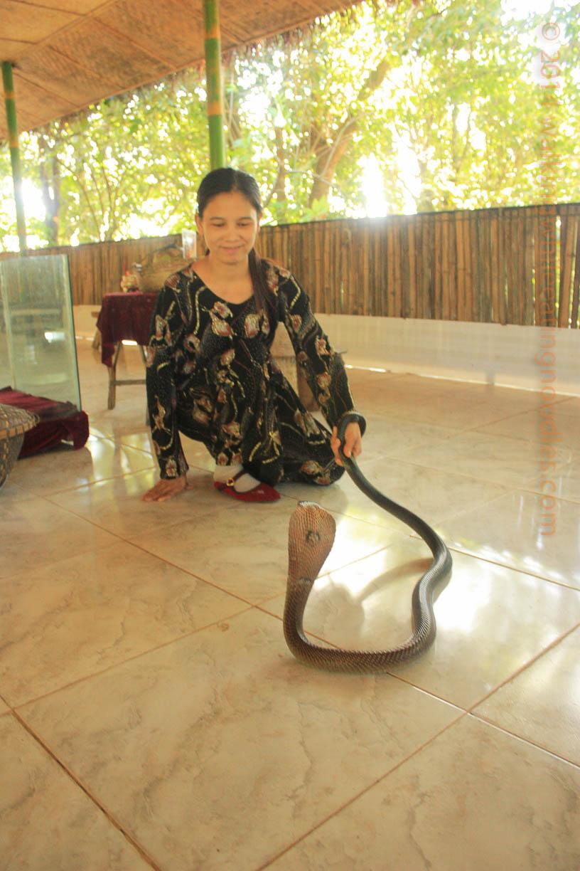 snake-tamer