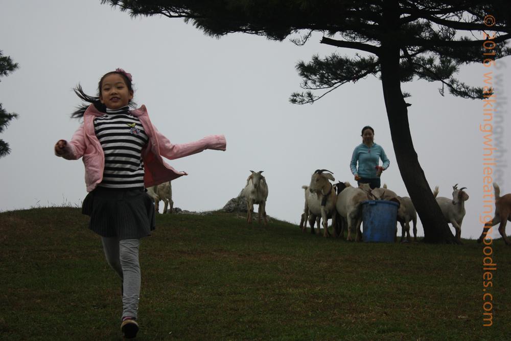Goat Pasture--Yichang, China