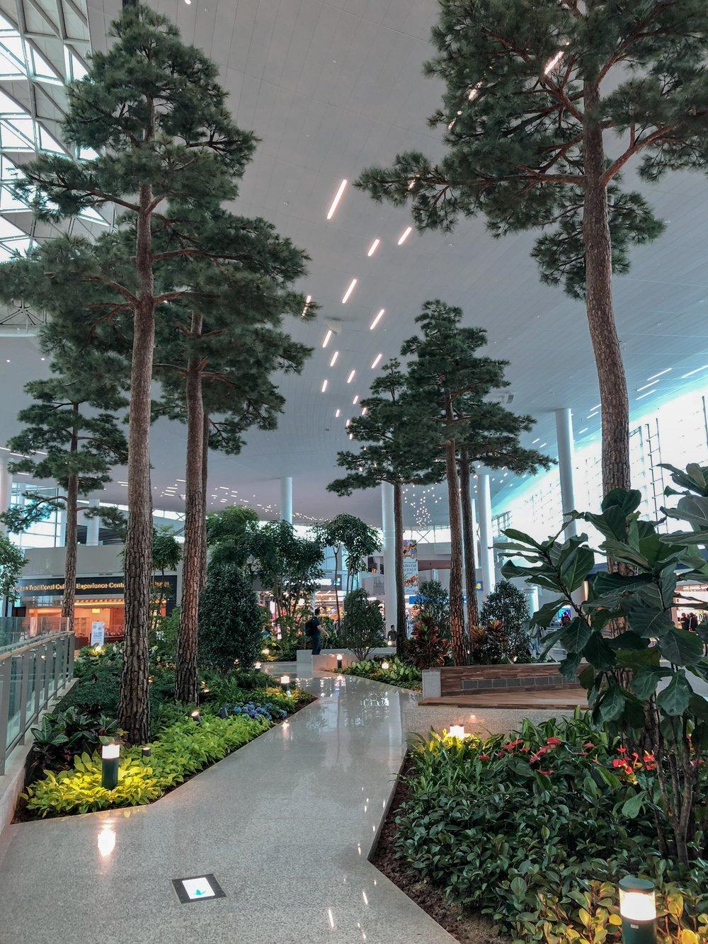 Cool indoor garden.