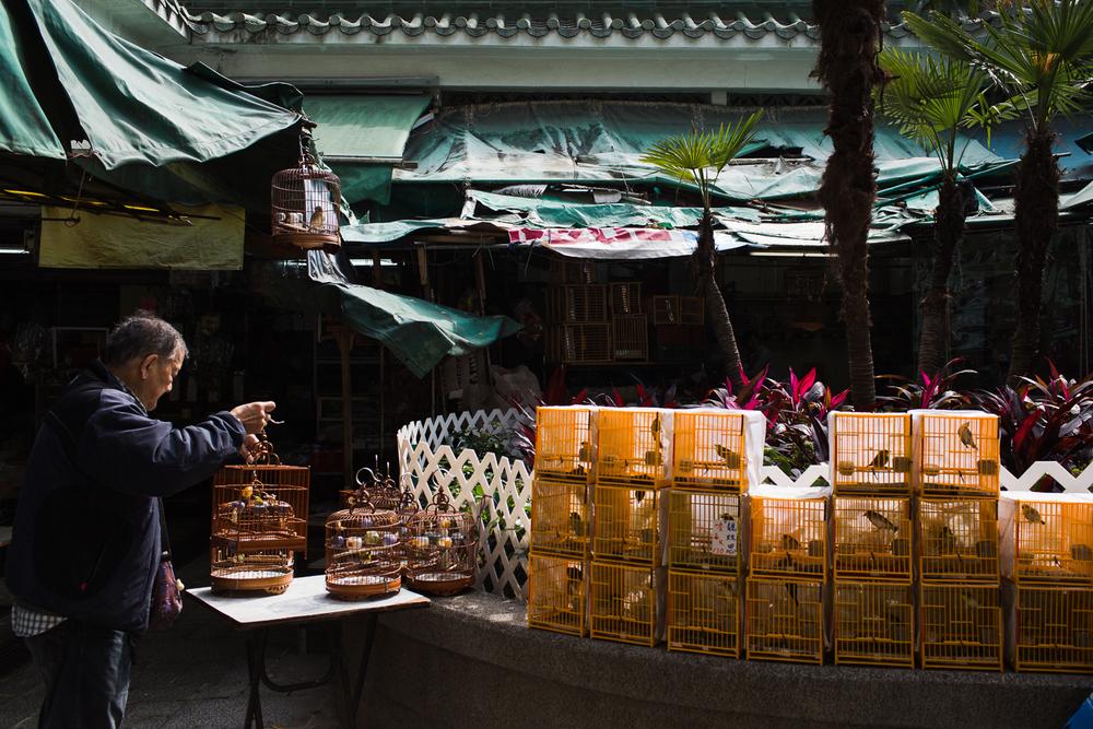 nicolaberryphotography_bird market_hong kong.jpg