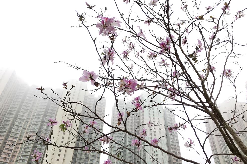 nicola berry photography_10_blossom_hang hau_hong kong.jpg