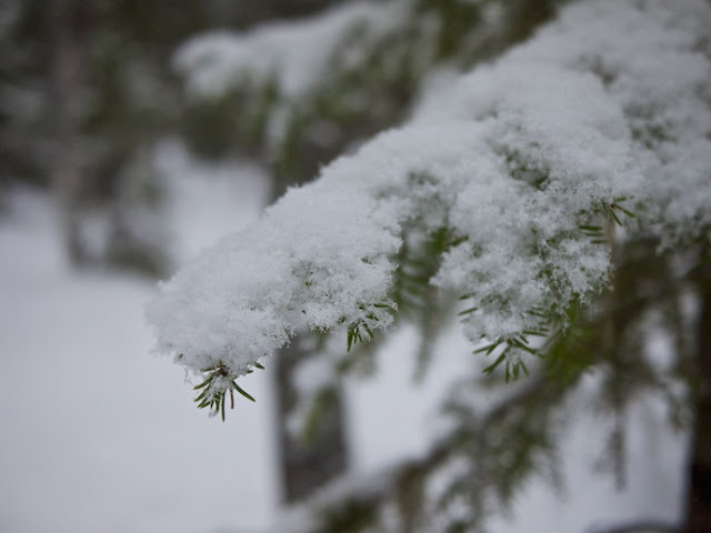 snow+62.jpg
