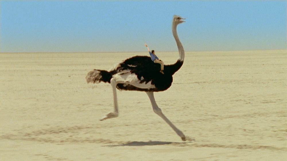 AWA Ep 17 Ostriches01.mov.10_11_57_12.Still001.jpg