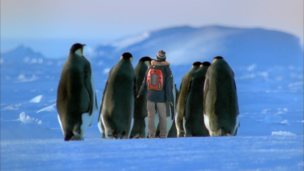 AWA EP 09 - Emperor Penguins01.mov.10_08_02_07.Still001.jpg