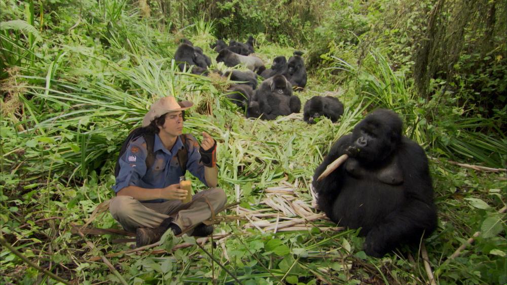 AWA Ep 03 Mountain Gorillas01.mov.10_08_48_17.Still001.jpg