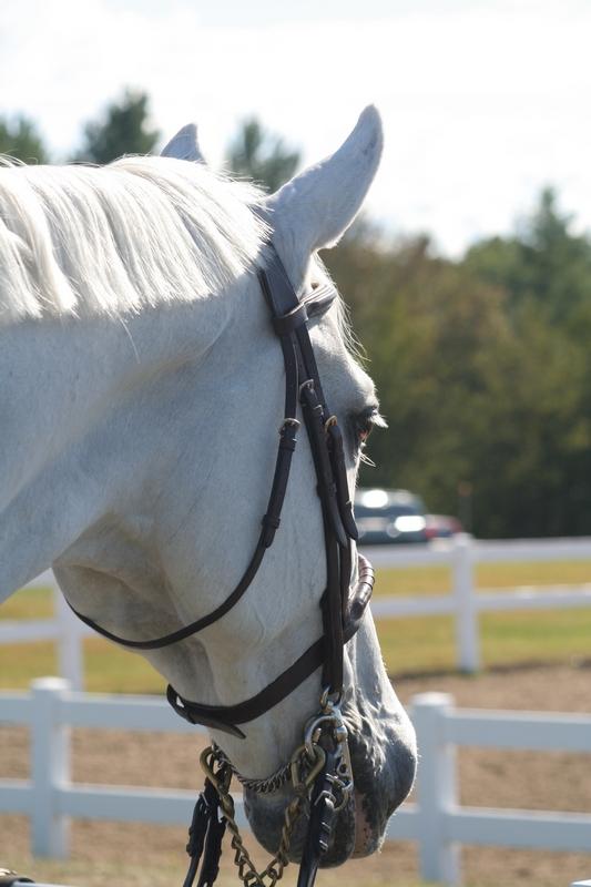 HorseWhiteHeadshot-Resized.JPG